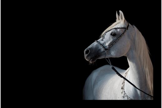 Модульная картина Белый конь